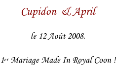 Cupidon  & April le 12 Août 2008.  1er Mariage Made In Royal Coon !